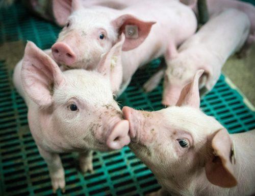 Tierhalter-Erklärung ist Pflicht ab 1. Juli 2019